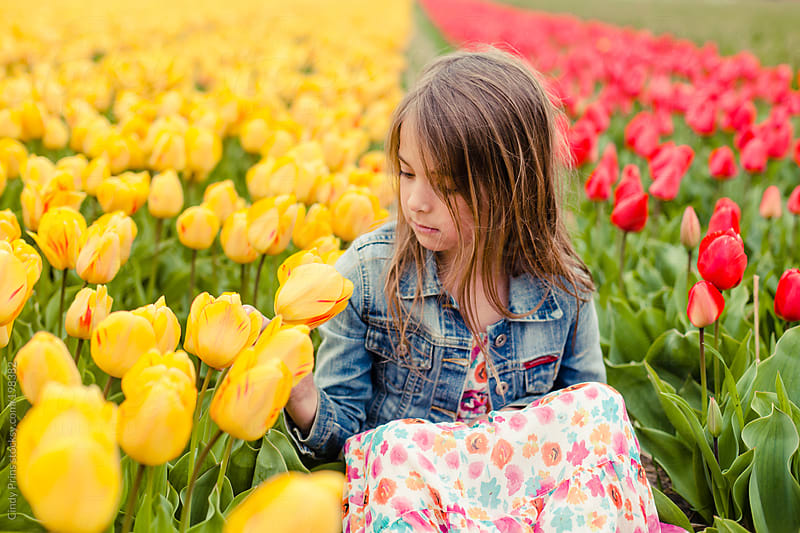 Little girl sitting in field of yellow and red tulips by Cindy Prins for Stocksy United