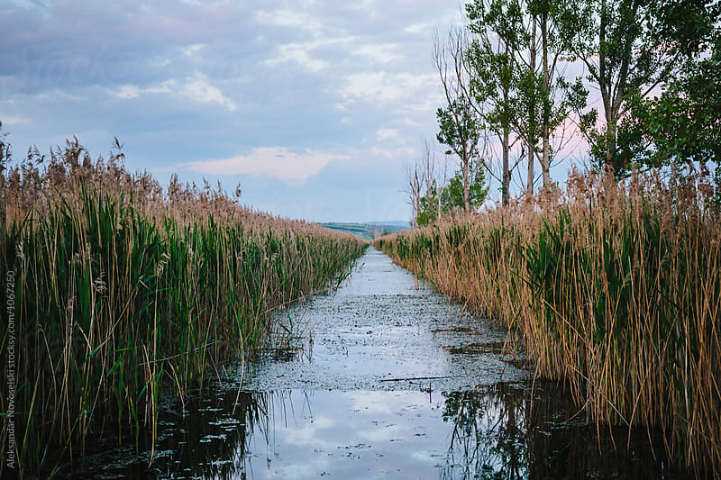 Swamp on a cloudy day by Aleksandar Novoselski for Stocksy United