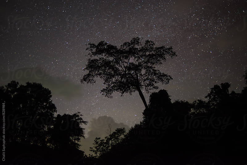 Stars. by Chalit Saphaphak for Stocksy United