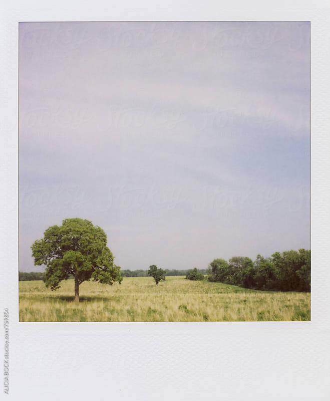 A Late Summer Field With Trees Photographed With Polaroid Film by ALICIA BOCK for Stocksy United