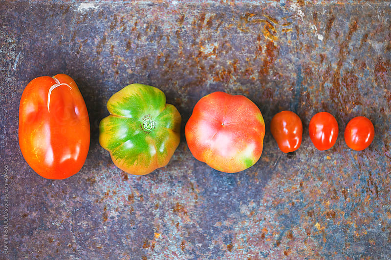 Variety of organic tomatoes from the orchard. by BONNINSTUDIO for Stocksy United