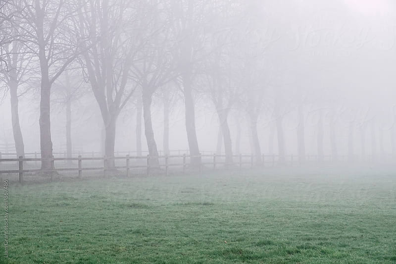 Fence beside an avenue of trees in fog. Norfolk, UK. by Liam Grant for Stocksy United