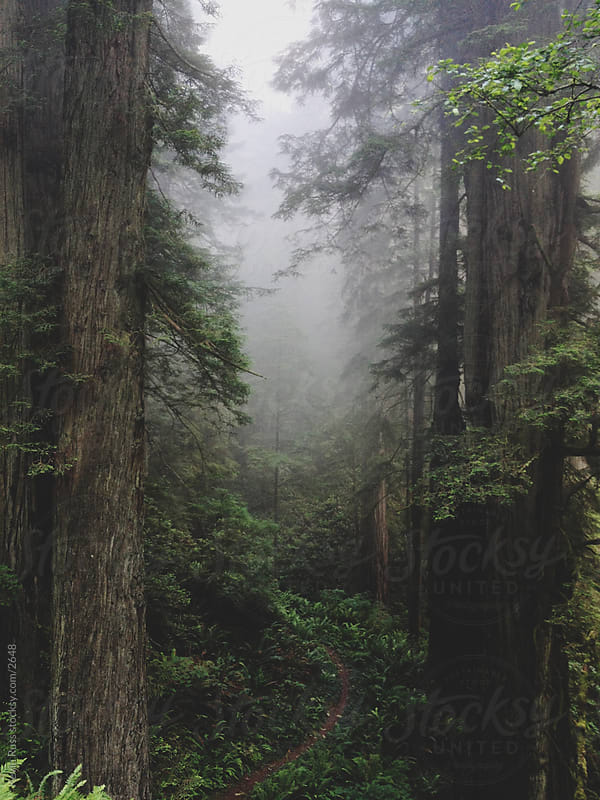 Foggy Forest Trail by Kevin Russ for Stocksy United