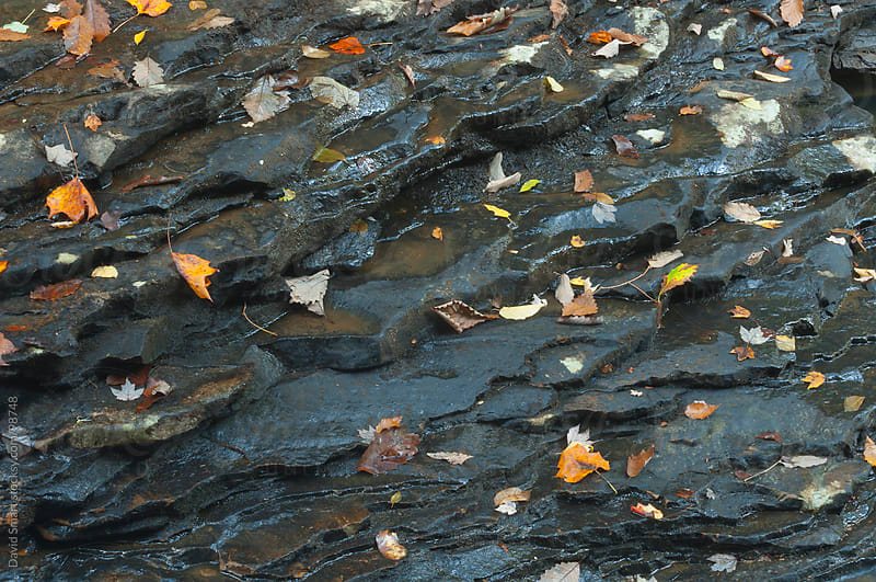 Autumn leaves on wet stone by David Smart for Stocksy United