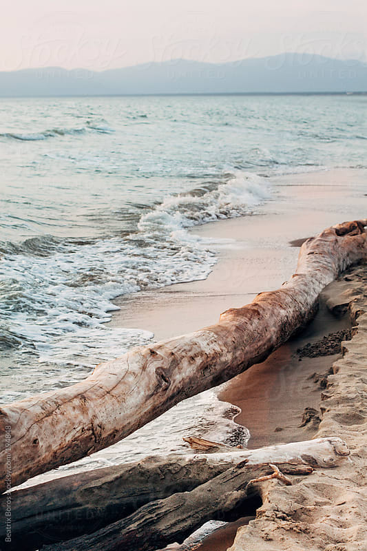 Horizontal tree trunk in front of the sea by Beatrix Boros for Stocksy United