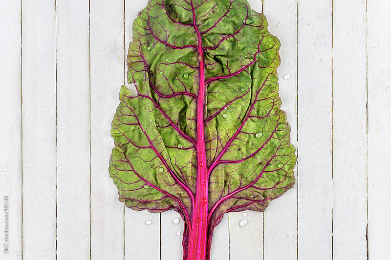 Fresh Organic Rainbow Chard by suzanne clements for Stocksy United
