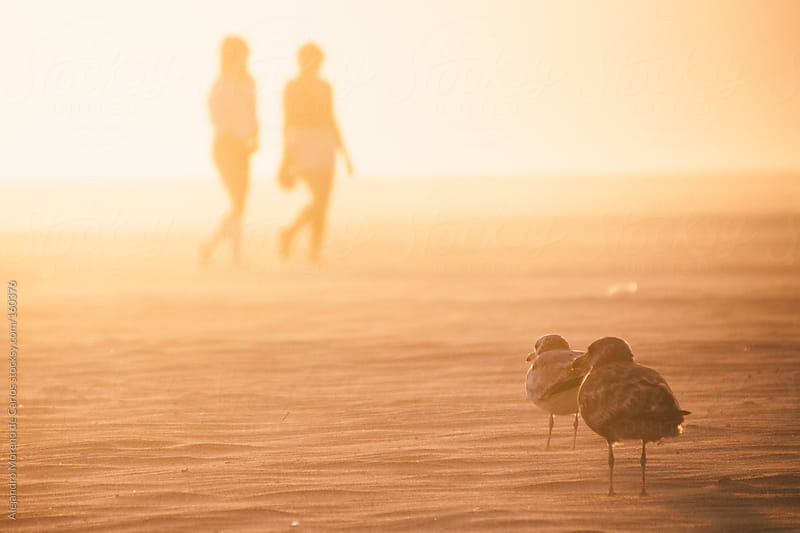Seagulls and girls on a beach at sunset in summer. Silhouettes by Alejandro Moreno de Carlos for Stocksy United