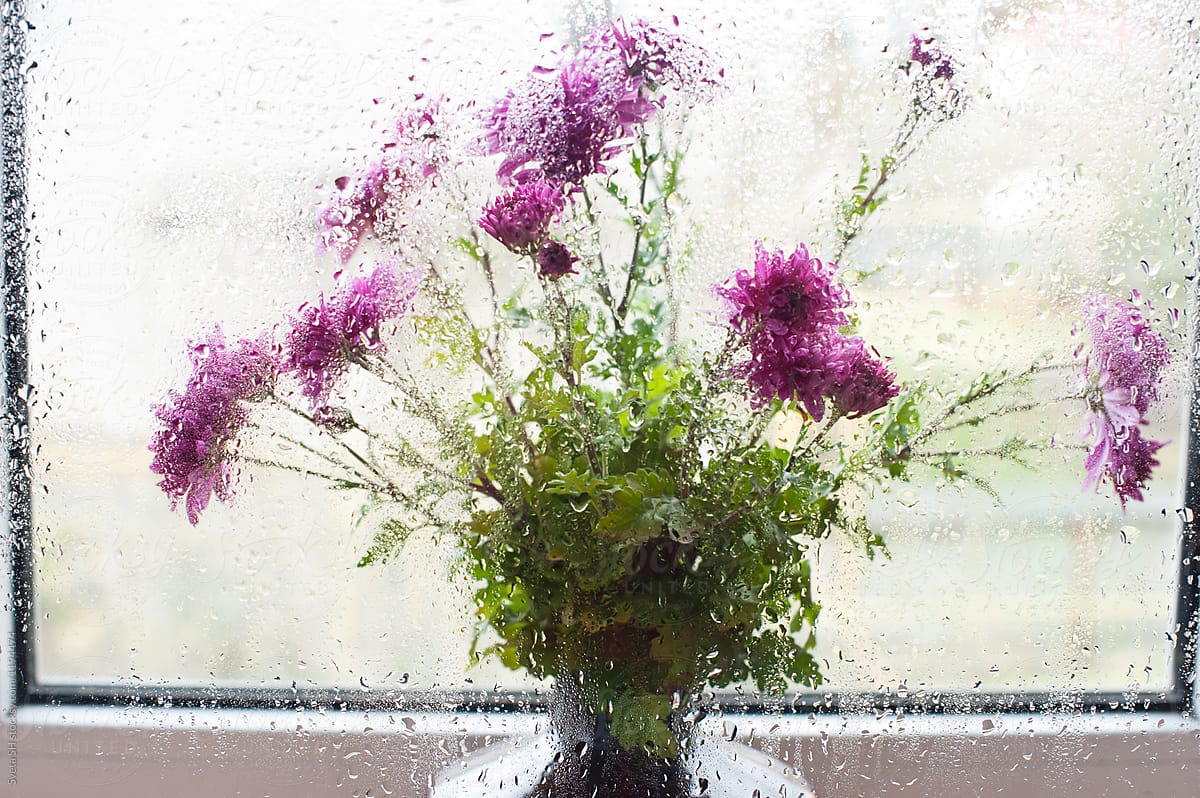 Dark Pink Autumn Flowers Stocksy United