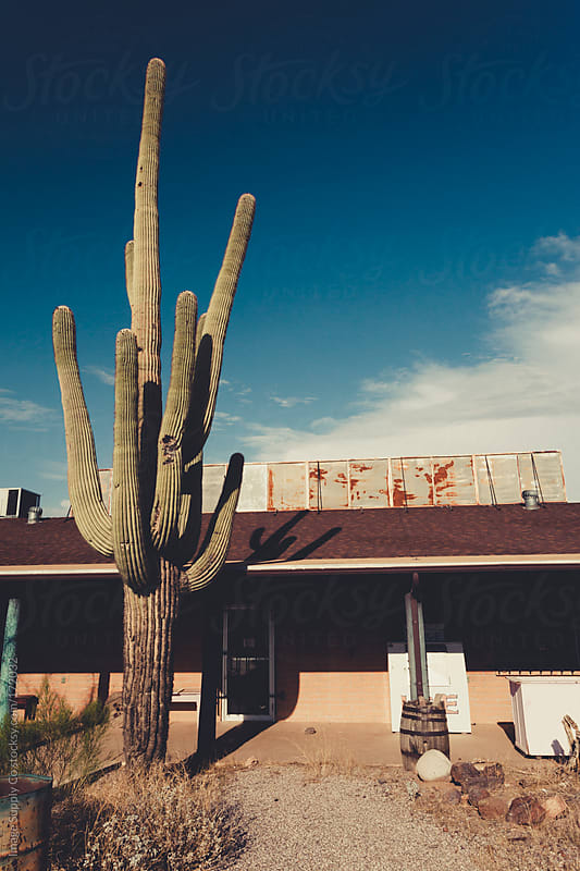 Giant Saguaro Cacti plant infront of abandoned building by Image Supply Co for Stocksy United