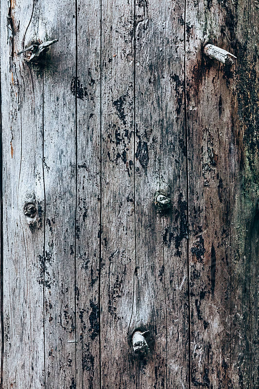 Dry fir tree trunk without bark closeup by Ilya for Stocksy United