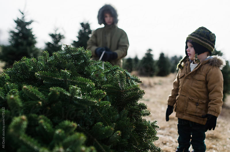 Boys and a Christmas Tree by Ali Deck for Stocksy United