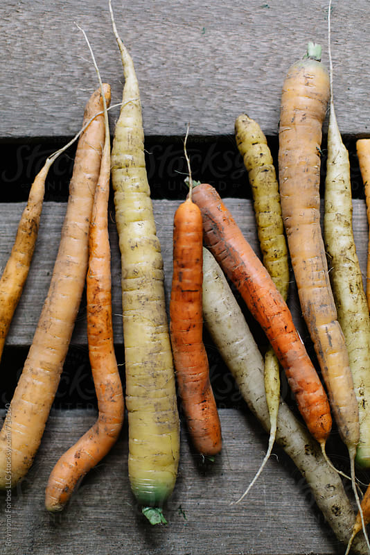 Organic Carrots by Raymond Forbes LLC for Stocksy United