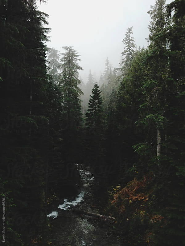 Mt Rainier Creek by Kevin Russ for Stocksy United