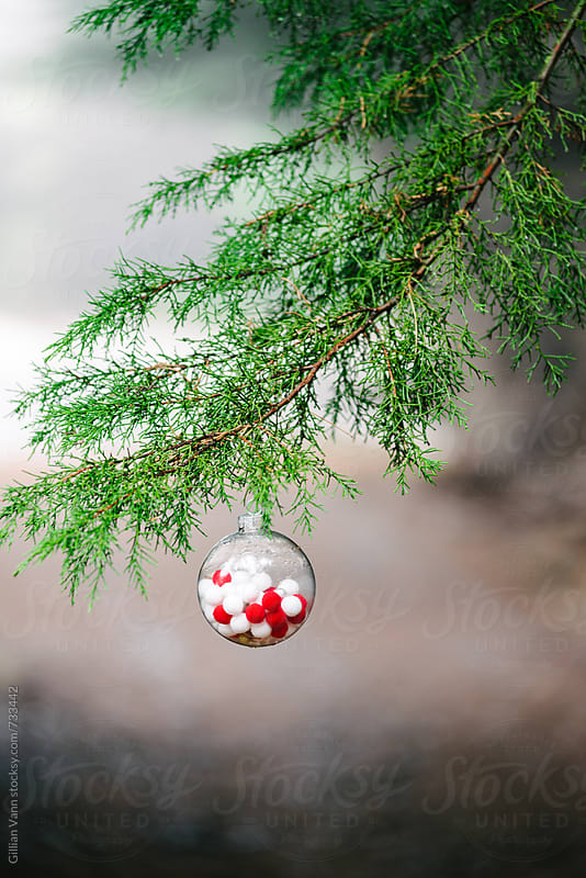 glass xmas ornament hanging on a pine tree by Gillian Vann for Stocksy United