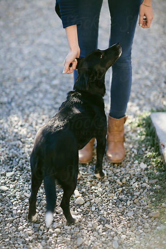 Caressing a dog by Laura Stolfi for Stocksy United