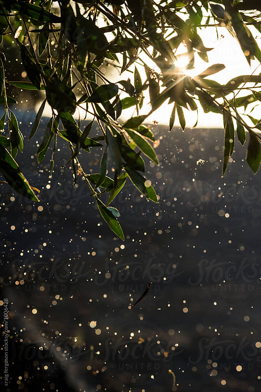 Raindrops and Sunlight by craig ferguson for Stocksy United