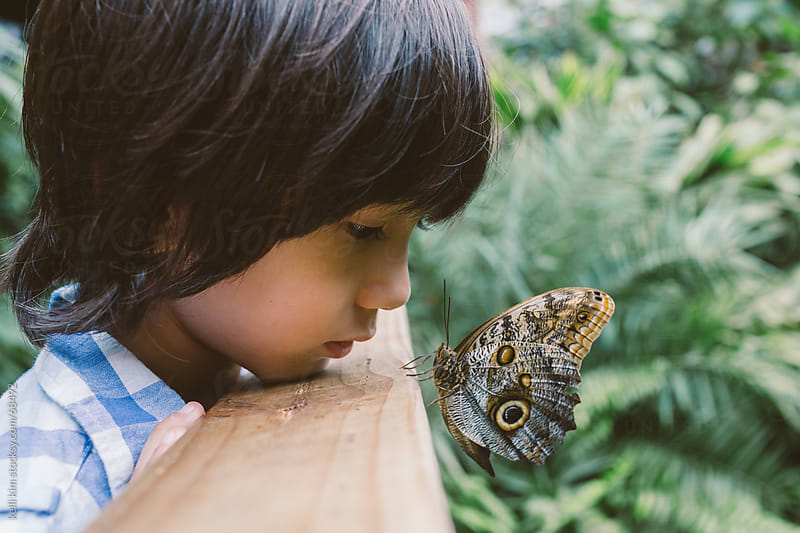 A Young Boy Spends A Quiet Closeup Moment With Butterfly by kelli kim for Stocksy United