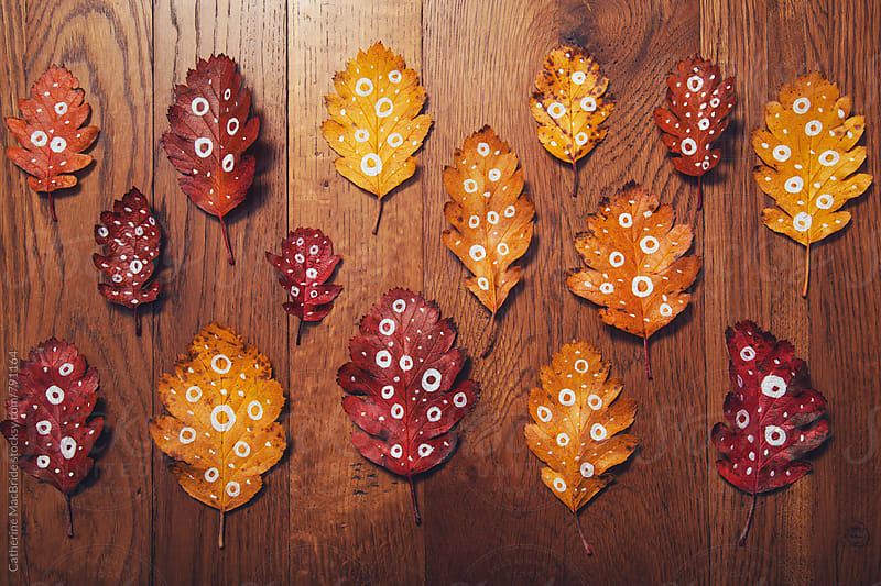 Dotty for fall leaves... by Catherine MacBride for Stocksy United