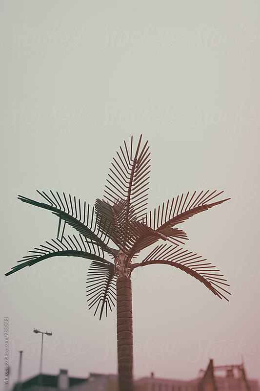 Fake palm tree from plastic by Marcel for Stocksy United