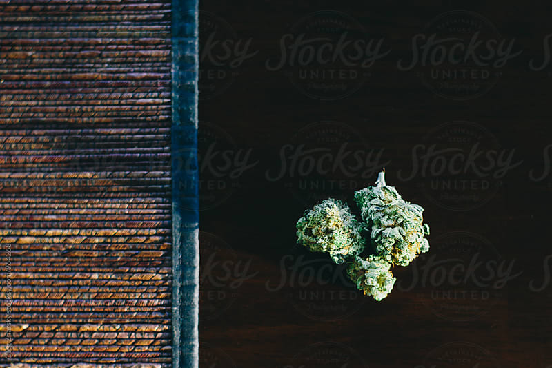 Cannabis by Oleg Zharsky for Stocksy United