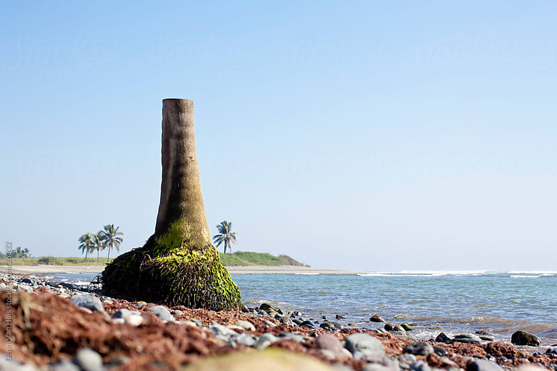 Surreal setting of a chopped palm tree washed up on the beach by Denni Van Huis for Stocksy United