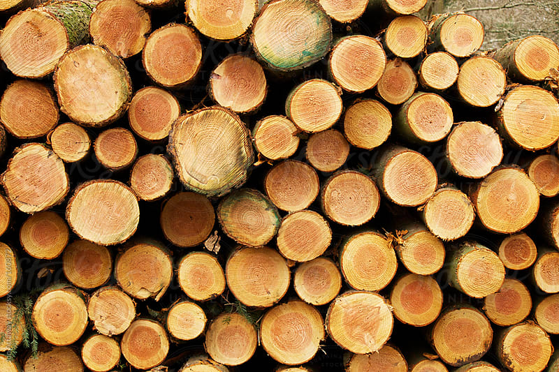 Logs piled up after felling. by Jon Attaway for Stocksy United