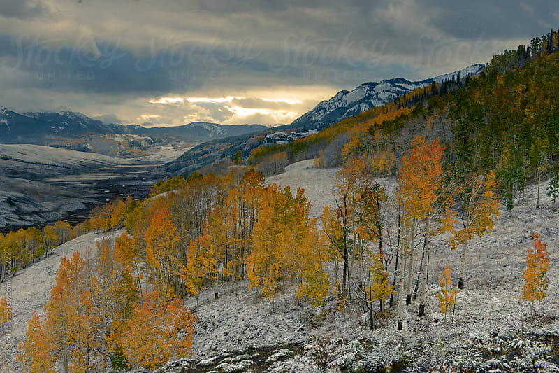 Early snow and changing aspens by Mick Follari for Stocksy United