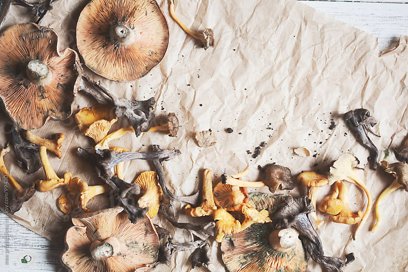 Still Life of edible mushrooms. by mee productions for Stocksy United