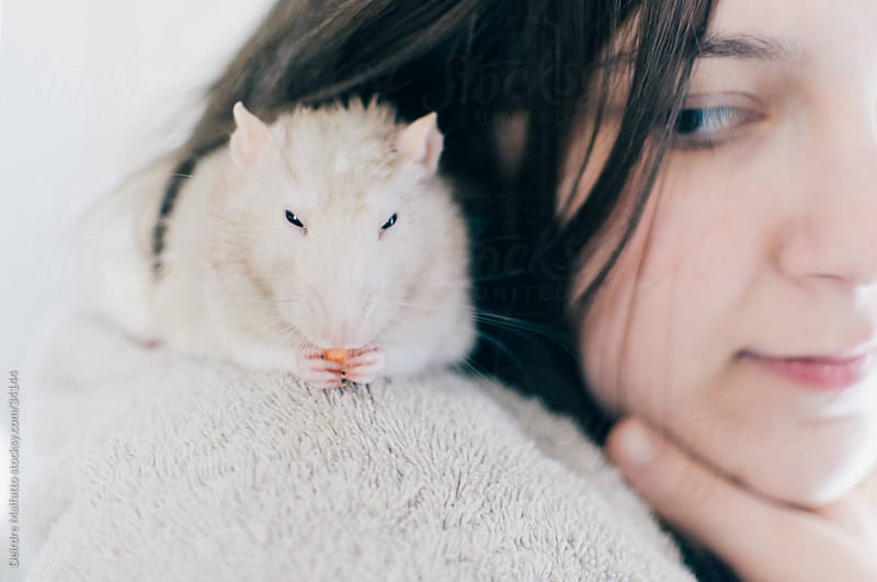 pet rat on shoulder eating cereal by Deirdre Malfatto for Stocksy United