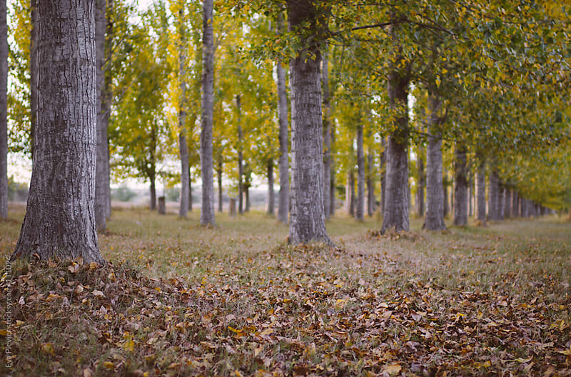 Forest in autumn by Eva Plevier for Stocksy United
