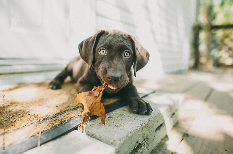 Puppy Chewing on a Leaf by michelle edmonds for Stocksy United