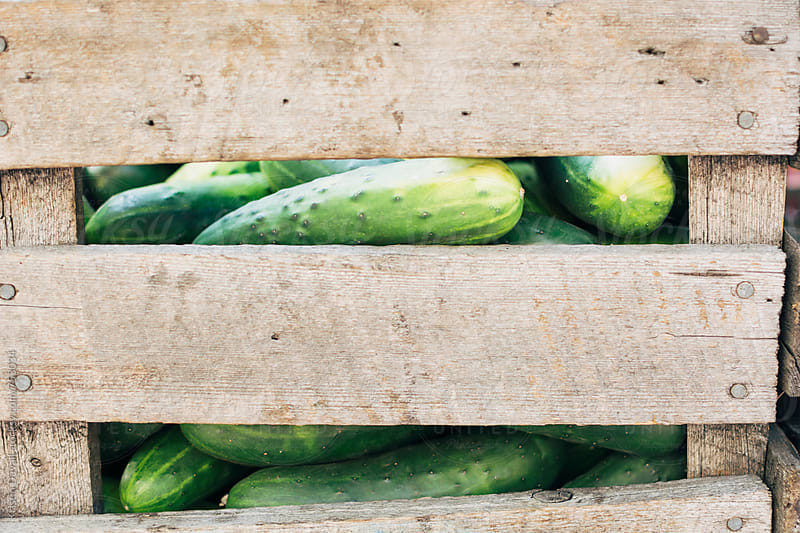 Fresh cucumbers in wooden crate at market. by Kristin Duvall for Stocksy United