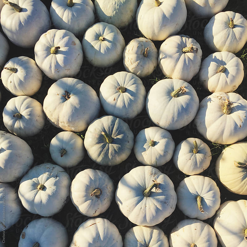 Pumpkins at a farm stand by Chelsea Victoria for Stocksy United