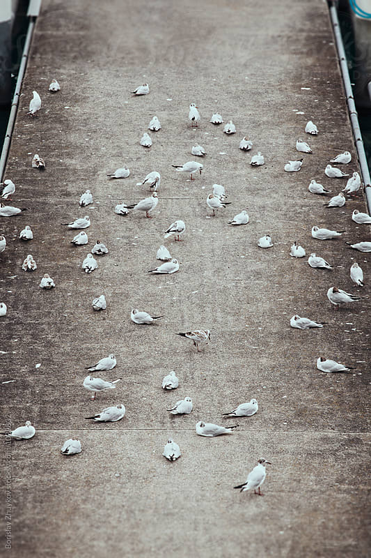 Seagulls on pier at lake by Borislav Zhuykov for Stocksy United