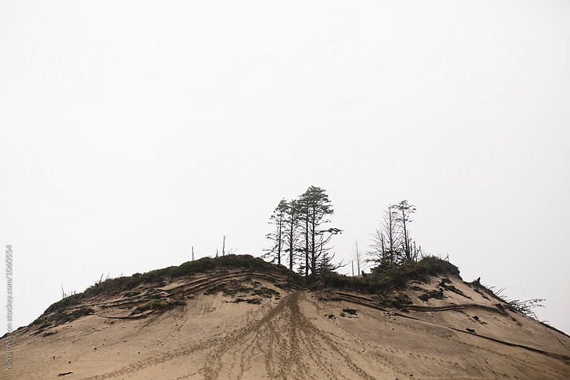 trees on top of sand dune at coast by Nicole Mason for Stocksy United