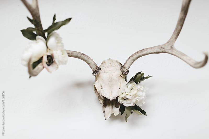 Deer Skull with Flowers on White Table