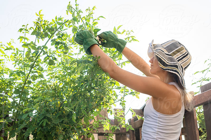 Woman trimming roses in the garden by RG&B Images for Stocksy United