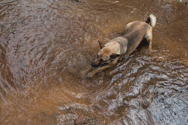 Dog stream by Chalit Saphaphak for Stocksy United