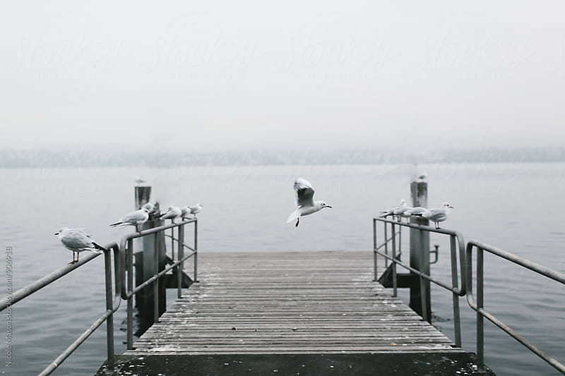 seagull flying by dock at lake  by Nicole Mason for Stocksy United