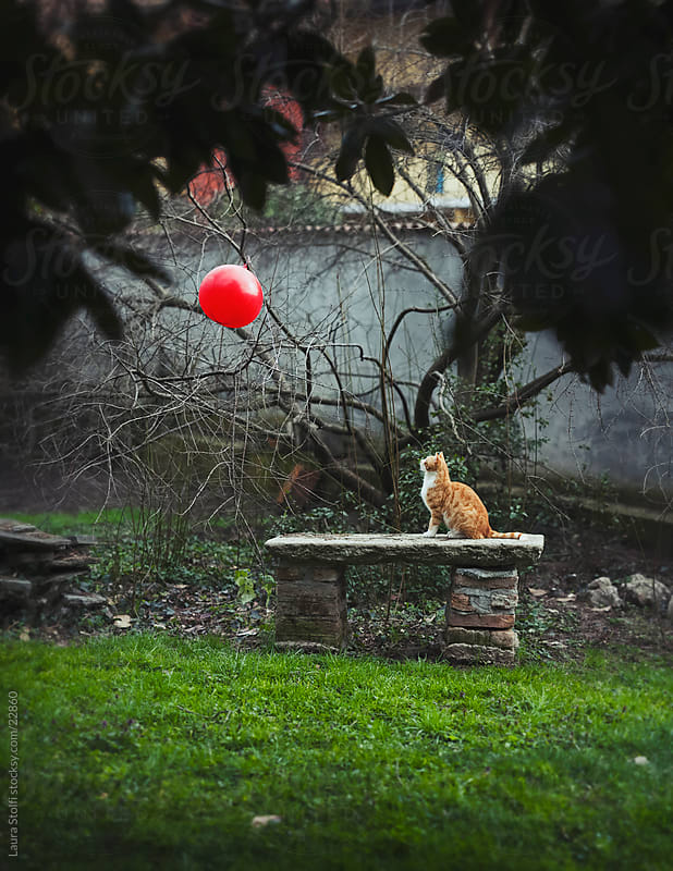 Red cat sitting on ancient stone bench in garden and staring at a floating red balloon by Laura Stolfi for Stocksy United
