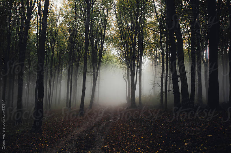 Road trough forest in autumn by Cosma Andrei for Stocksy United