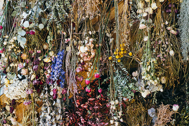 Dried flowers hanging on the wall of flora shop by Maa Hoo for Stocksy United