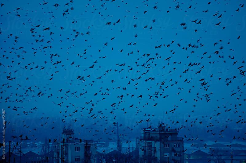birds in the sky by Sonja Lekovic for Stocksy United