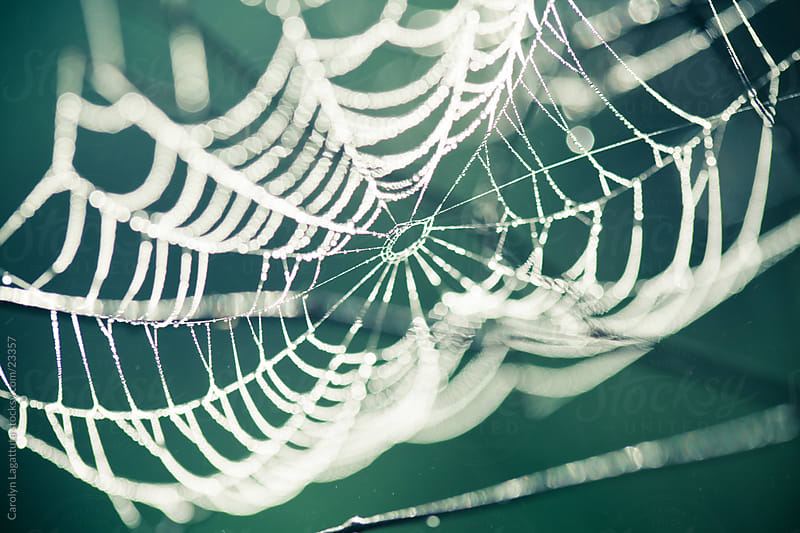 Perfect looking spider web with a green background by Carolyn Lagattuta for Stocksy United