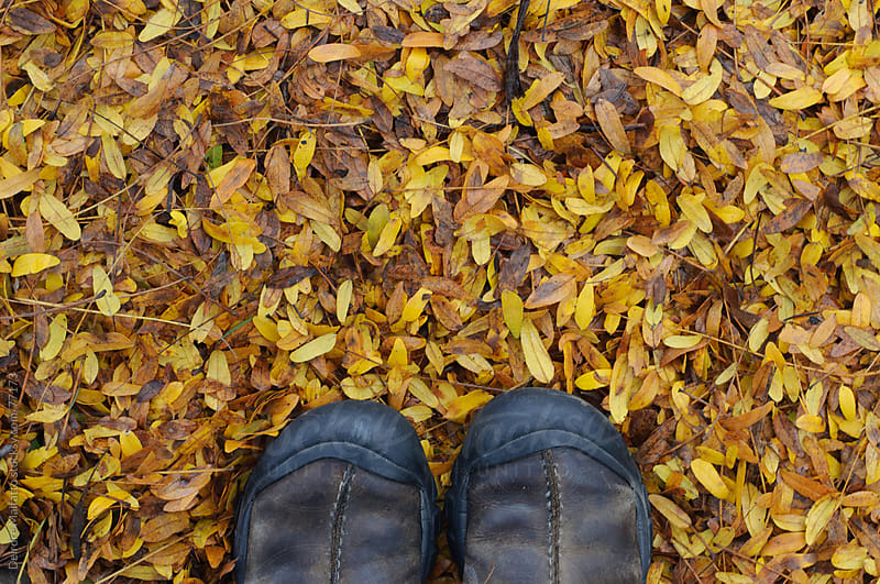 feet standing on fallen yellow ash leaves in autumn by Deirdre Malfatto for Stocksy United