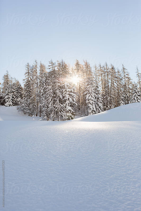 Sunshine rays among snow covered trees by michela ravasio for Stocksy United
