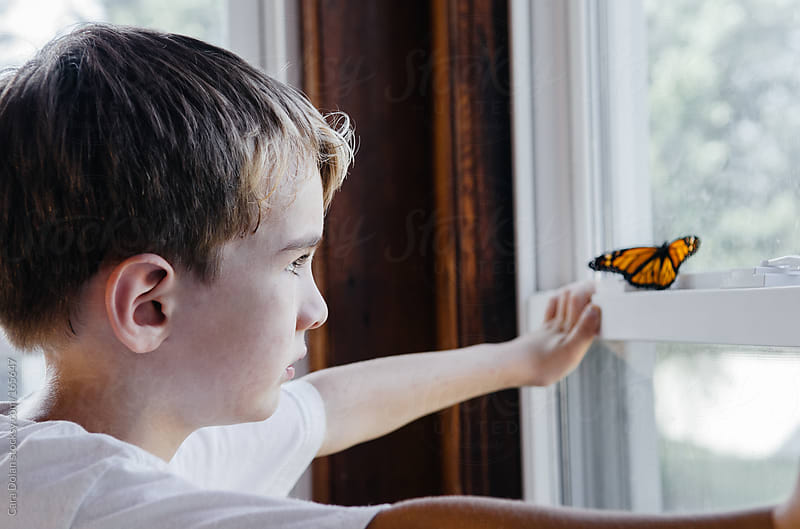 Boy watches monarch butterfly that is perched on his window by Cara Dolan for Stocksy United