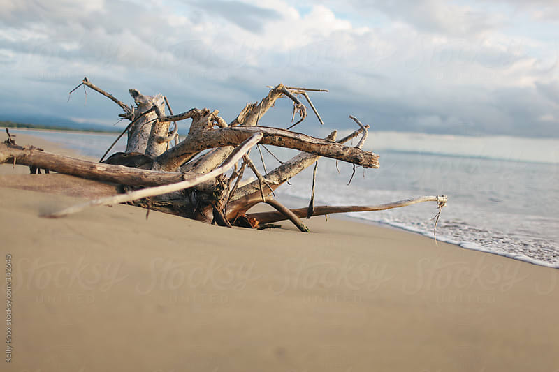 driftwood on the beach by Kelly Knox for Stocksy United