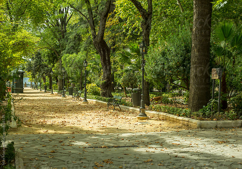 A shady leafy avenue in a public park. by Mike Marlowe for Stocksy United