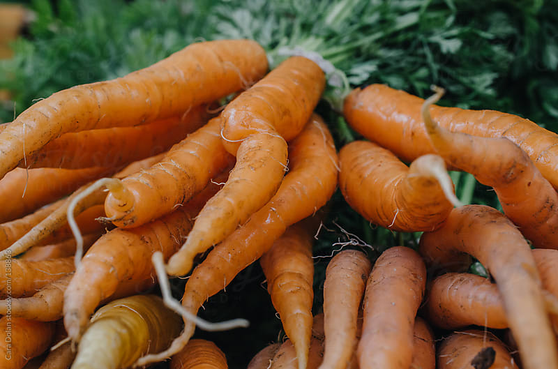 Bunches of fresh organic carrots for sale at a farmer's market by Cara Dolan for Stocksy United